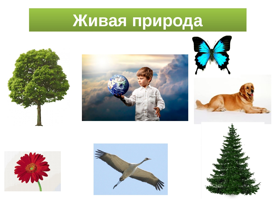 Живая природа