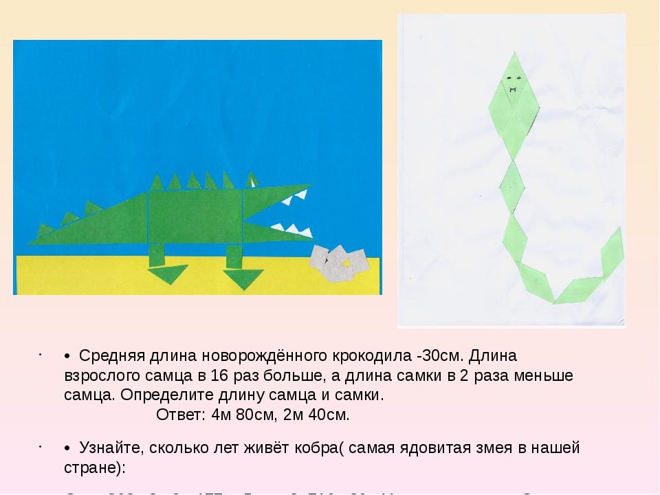 • Средняя длина новорождённого крокодила -30см. Длина взрослого самца в 16 р...