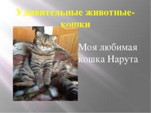 Удивительные животные- кошки Моя любимая кошка Нарута