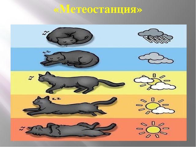 «Метеостанция»