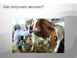 Как получают молоко?