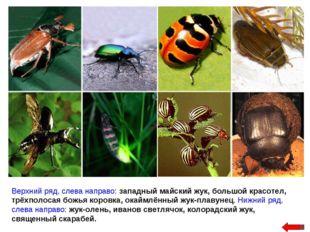 Верхний ряд, слева направо: западный майский жук, большой красотел, трёхполос
