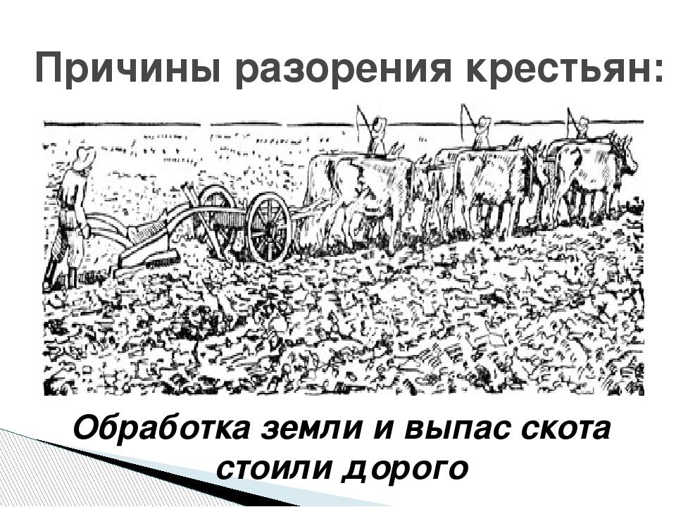 Причины разорения крестьян: Обработка земли и выпас скота стоили дорого