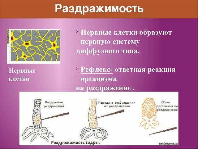 Раздражимость Нервные клетки образуют нервную систему диффузного типа. Рефлек...