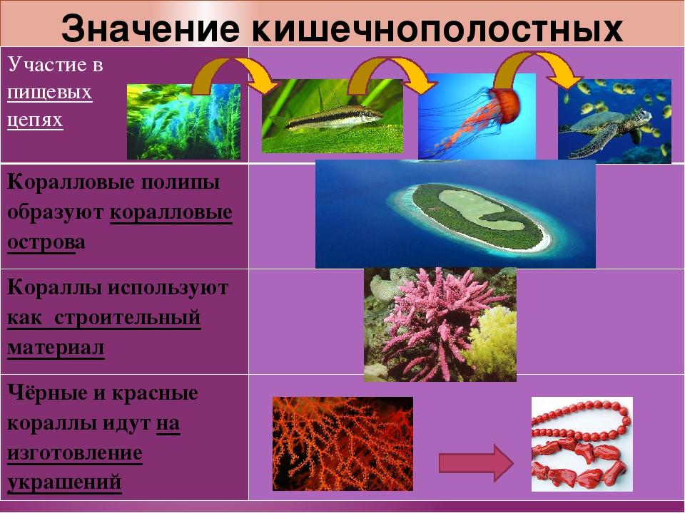 Значение кишечнополостных Участие в пищевых цепях Коралловыеполипы образуютко...