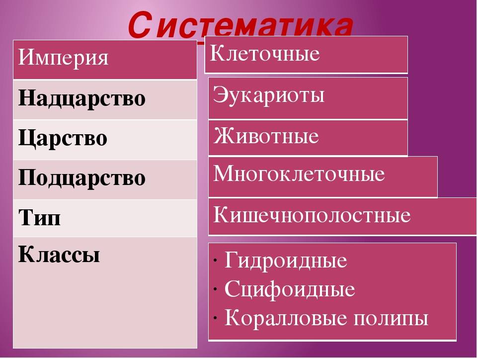 Систематика Империя Надцарство Царство Подцарство Тип Классы Гидроидные Сцифо...