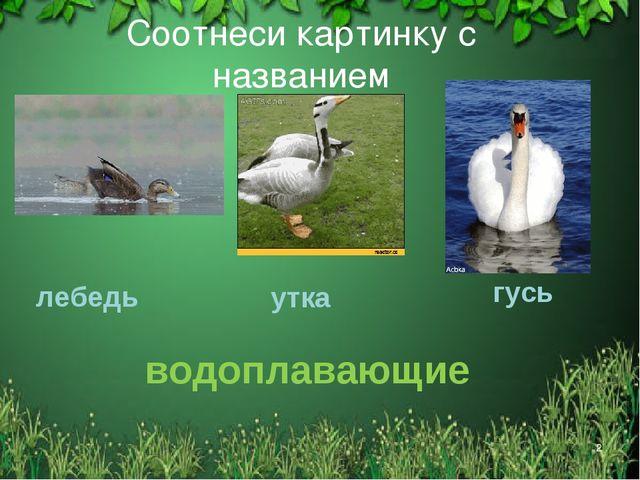 * Соотнеси картинку с названием лебедь утка гусь водоплавающие