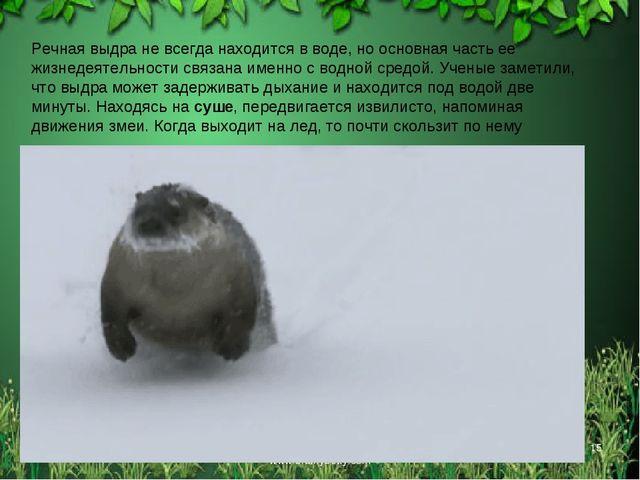 * Free template from www.brainybetty.com * Речная выдра не всегда находится в...