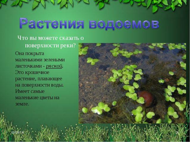 * * Что вы можете сказать о поверхности реки? Она покрыта маленькими зелеными...