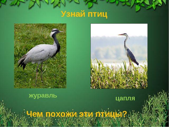 * Узнай птиц журавль цапля Чем похожи эти птицы?