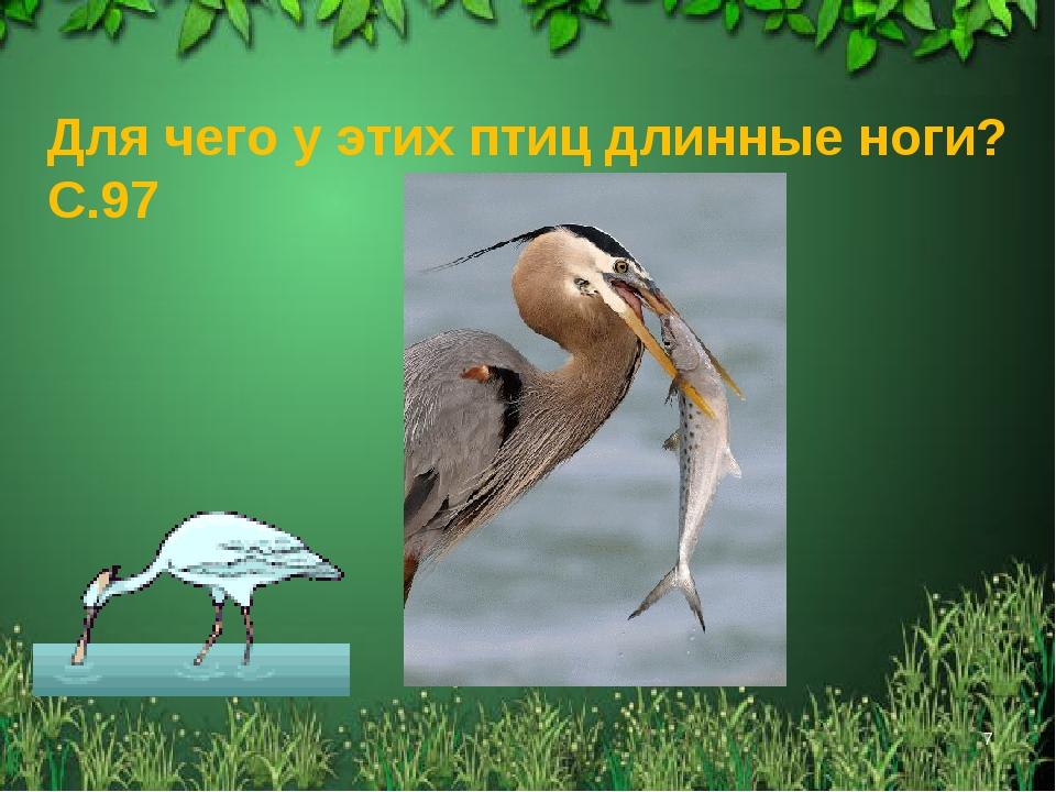 * Для чего у этих птиц длинные ноги? С.97