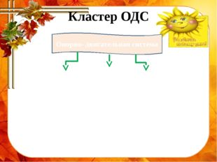 Кластер ОДС Опорно- двигательная система