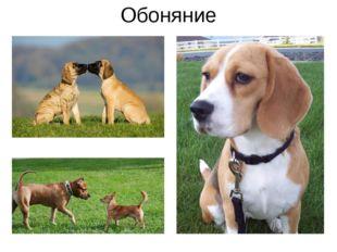 Обоняние Все обращали своё внимание на то, что животные при встрече с друг др