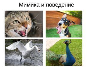 Мимика и поведение Звуками, «жестами» и мимикой животные общаются друг с друг