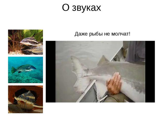 О звуках Даже рыбы не молчат! Всем известен фразеологизм «нем как рыба». Но д...