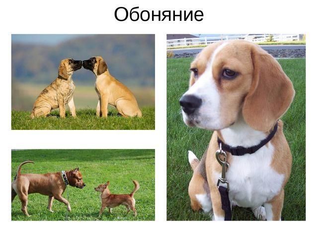 Обоняние Все обращали своё внимание на то, что животные при встрече с друг др...