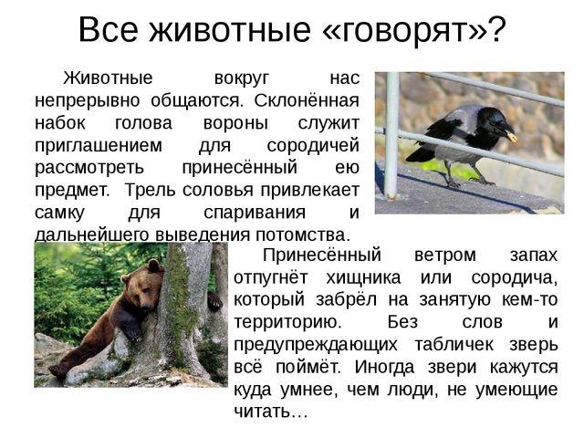 Животные вокруг нас непрерывно общаются. Склонённая набок голова вороны служи...