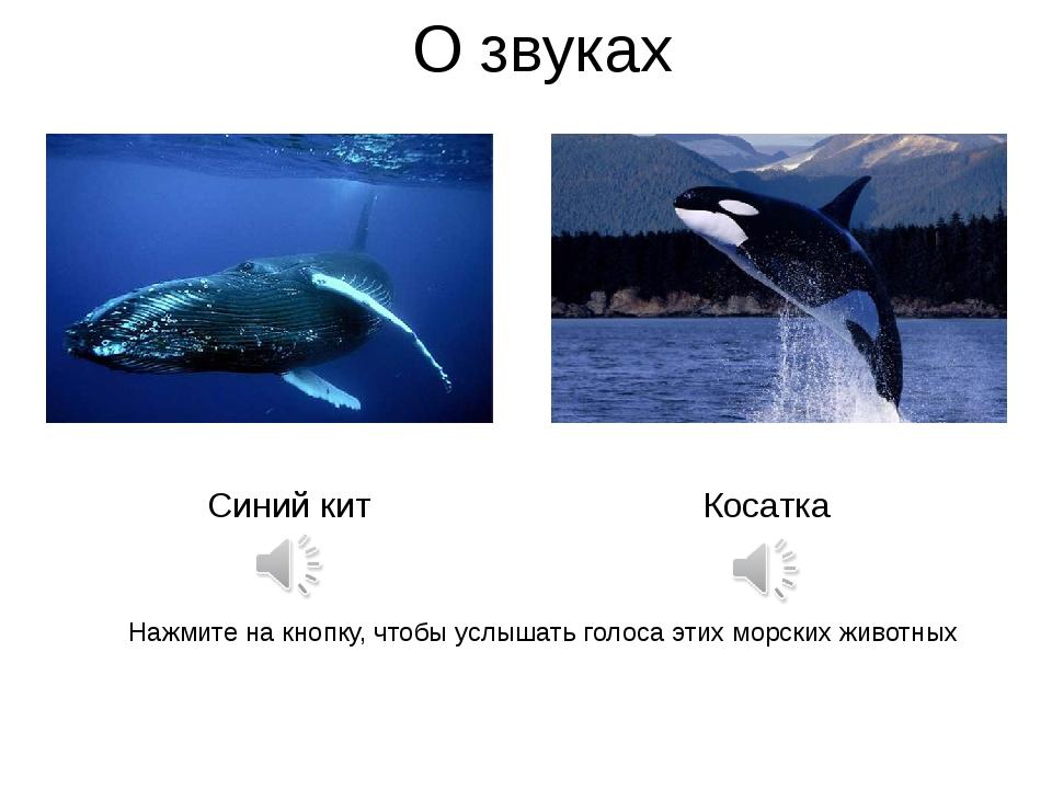 О звуках Синий кит Косатка Нажмите на кнопку, чтобы услышать голоса этих морс...