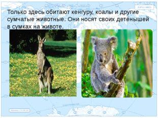 Евразия . Только здесь обитают кенгуру, коалы и другие сумчатые животные. Они