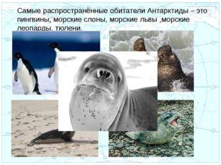 Евразия . Самые распространённые обитатели Антарктиды – это пингвины, морские