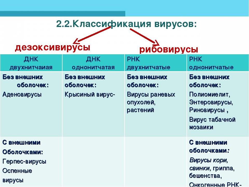 2.2.Классификация вирусов: дезоксивирусы рибовирусы     ДНК двухн...