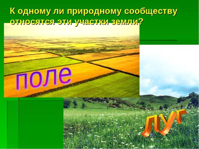К одному ли природному сообществу относятся эти участки земли?
