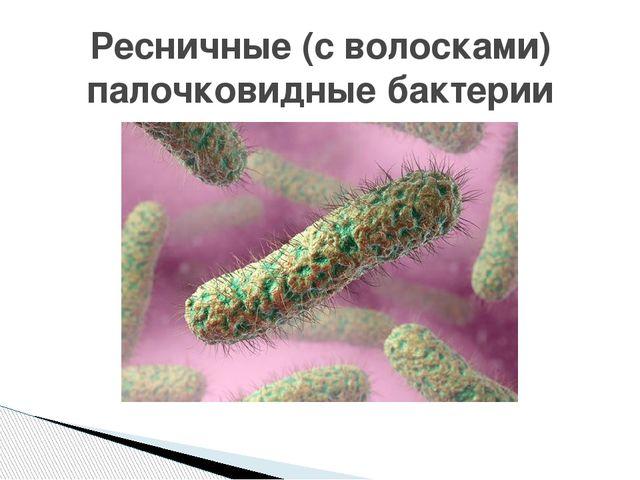 Ресничные (с волосками) палочковидные бактерии