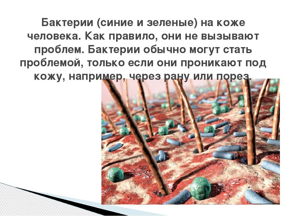 Бактерии (синие и зеленые) на коже человека. Как правило, они не вызывают про...