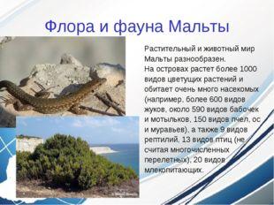 Флора и фауна Мальты Растительный и животный мир Мальты разнообразен. На остр