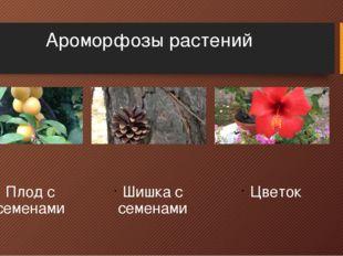 Ароморфозы растений Плод с семенами Шишка с семенами Цветок