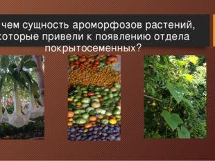 В чем сущность ароморфозов растений, которые привели к появлению отдела покры