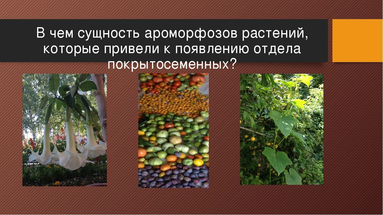 В чем сущность ароморфозов растений, которые привели к появлению отдела покры...
