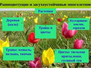 Раннецветущие и засухоустойчивые многолетние Растения Деревья (мало) Кустарни
