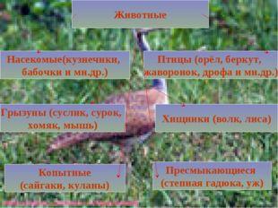 Животные Насекомые(кузнечики, бабочки и мн.др.) Птицы (орёл, беркут, жавороно