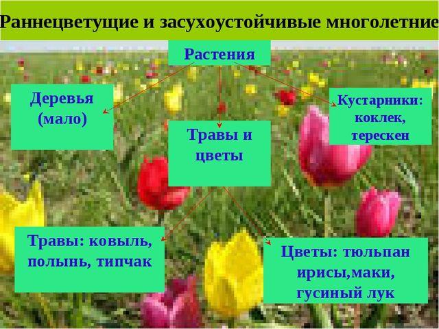 Раннецветущие и засухоустойчивые многолетние Растения Деревья (мало) Кустарни...