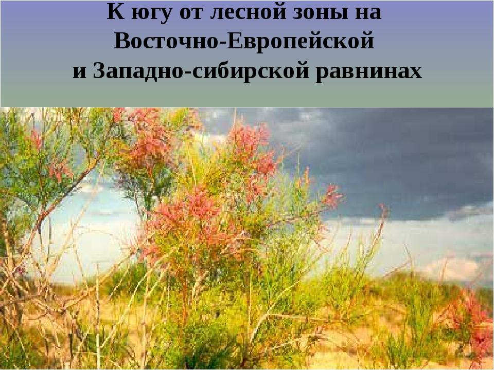 К югу от лесной зоны на Восточно-Европейской и Западно-сибирской равнинах