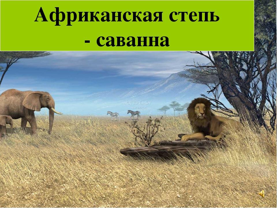 Африканская степь - саванна