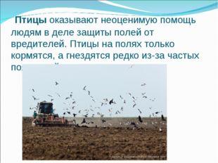 Птицыоказывают неоценимую помощь людям в деле защиты полей от вредителей. П