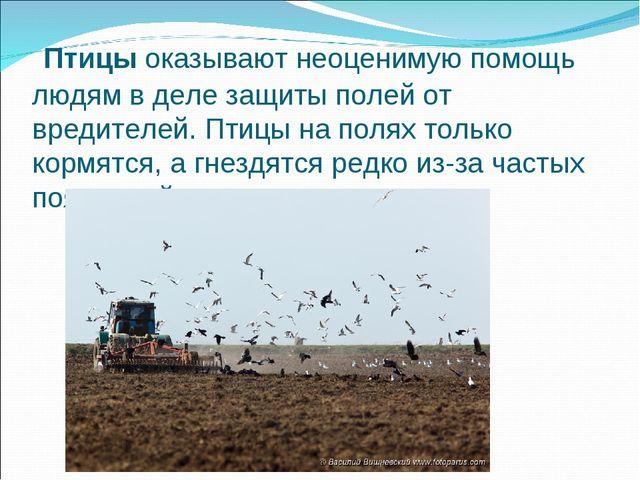 Птицыоказывают неоценимую помощь людям в деле защиты полей от вредителей. П...