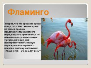 Фламинго Говорят, что эта красивая яркая птица достойна звания одного из самы