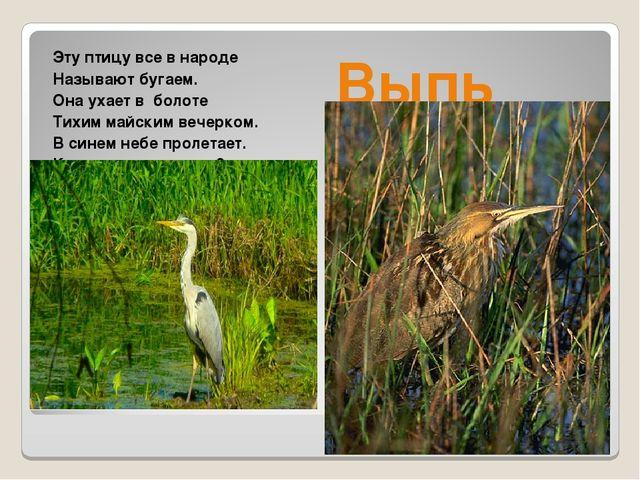 Эту птицу все в народе Называют бугаем. Она ухает в болоте Тихим майским вече...