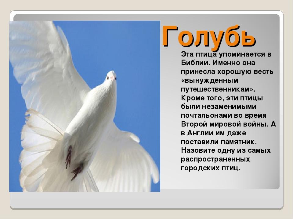 Голубь Эта птица упоминается в Библии. Именно она принесла хорошую весть «вын...