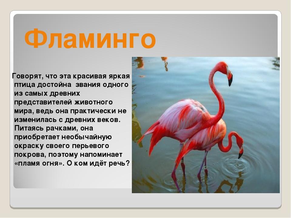 Фламинго Говорят, что эта красивая яркая птица достойна звания одного из самы...