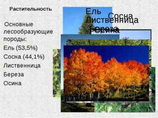 Растительность Основные лесообразующие породы: Ель (53,5%) Сосна (44,1%) Лист