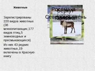 Животные Зарегистрированы 220 видов животных (38 млекопитающих,177 видов птиц