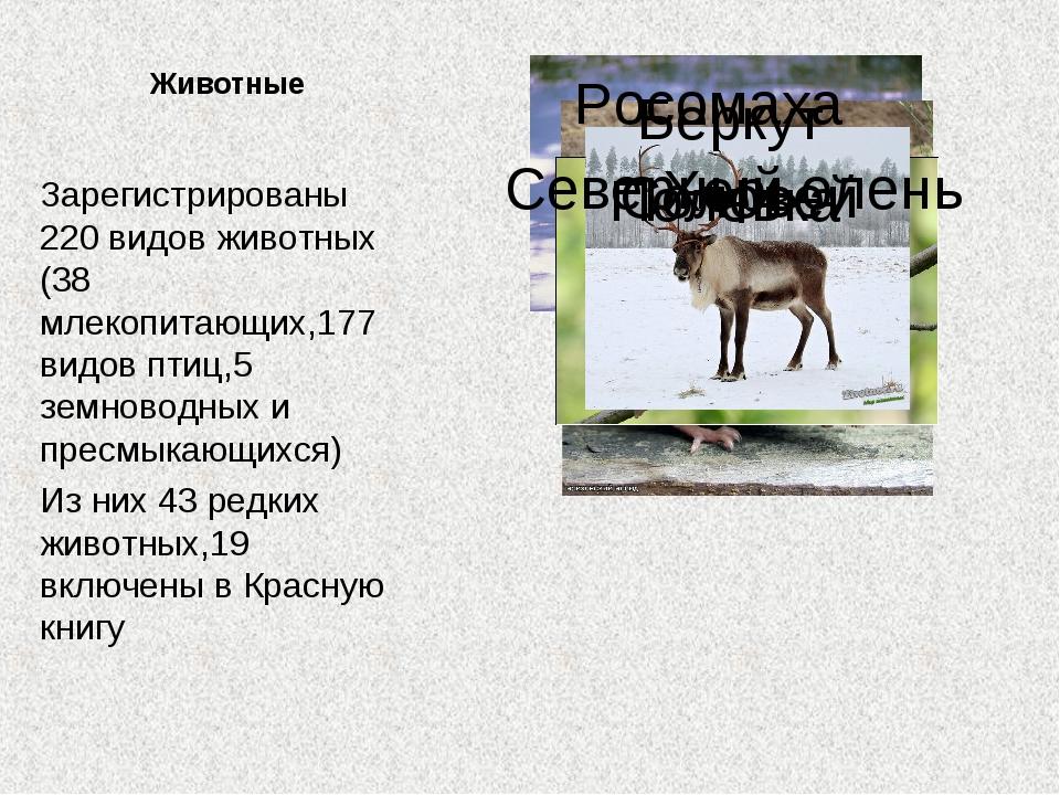 Животные Зарегистрированы 220 видов животных (38 млекопитающих,177 видов птиц...
