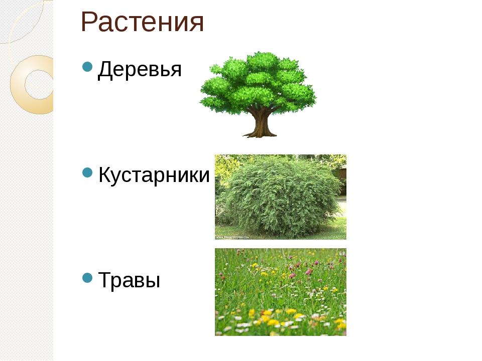 Картинки групп растений деревья кустарники и травы вечера