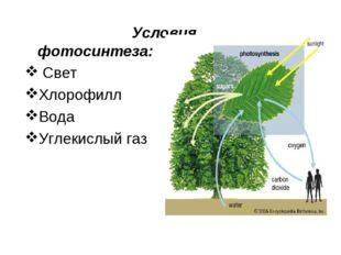 Условия фотосинтеза: Свет Хлорофилл Вода Углекислый газ