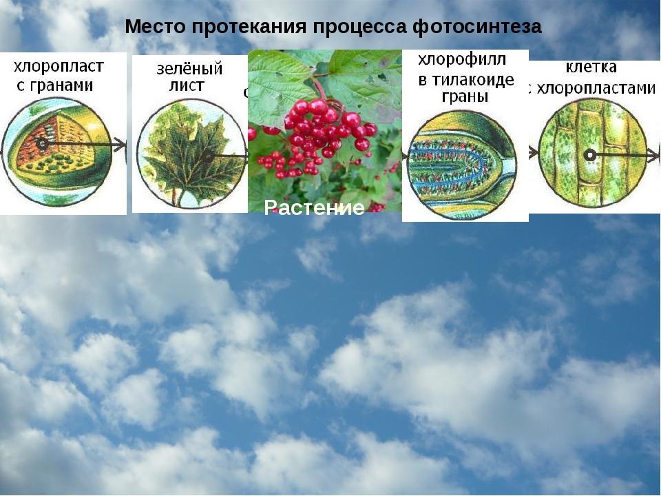 Место протекания процесса фотосинтеза