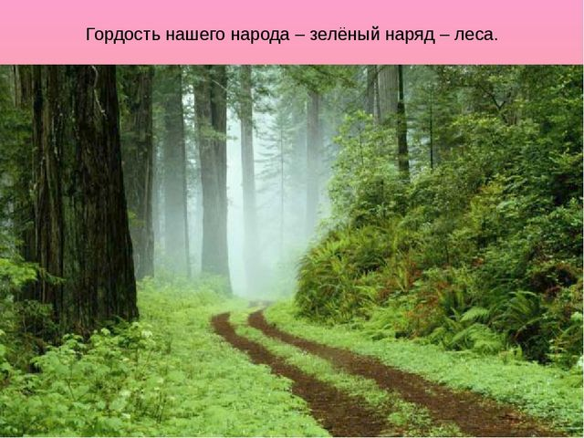 Гордость нашего народа – зелёный наряд – леса.